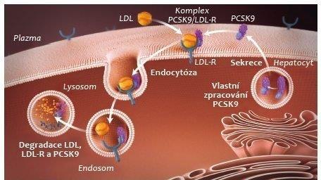 MedPed a novinky v léčbě dyslipidémií