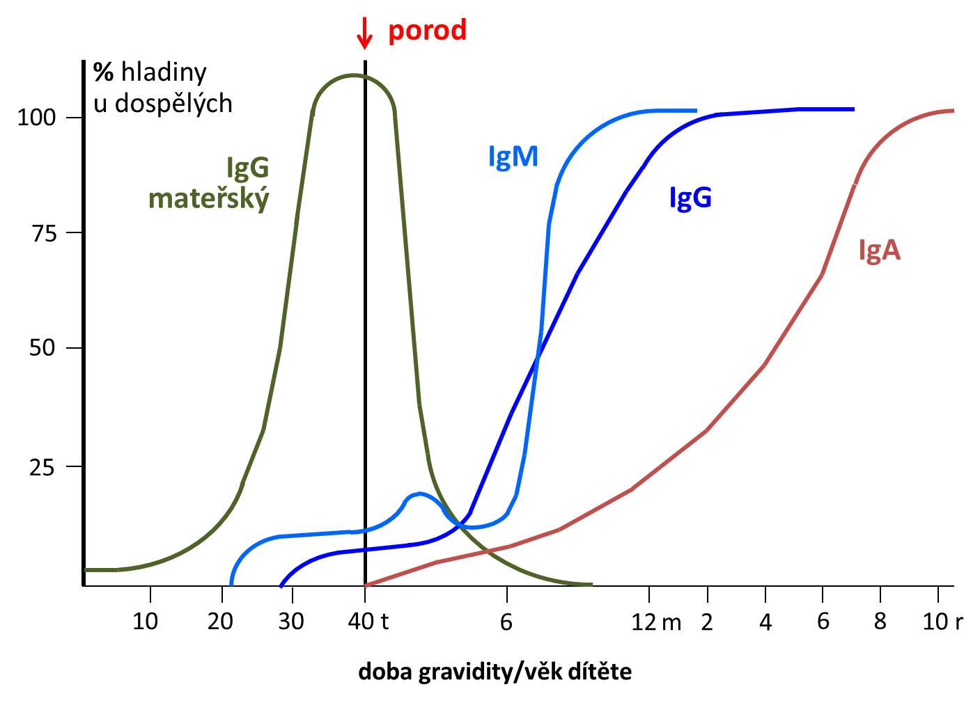 Vývoj koncentrace imunoglobulinů
